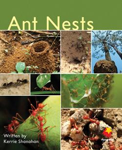 Ant Nests