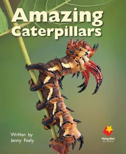 Amazing Caterpillars
